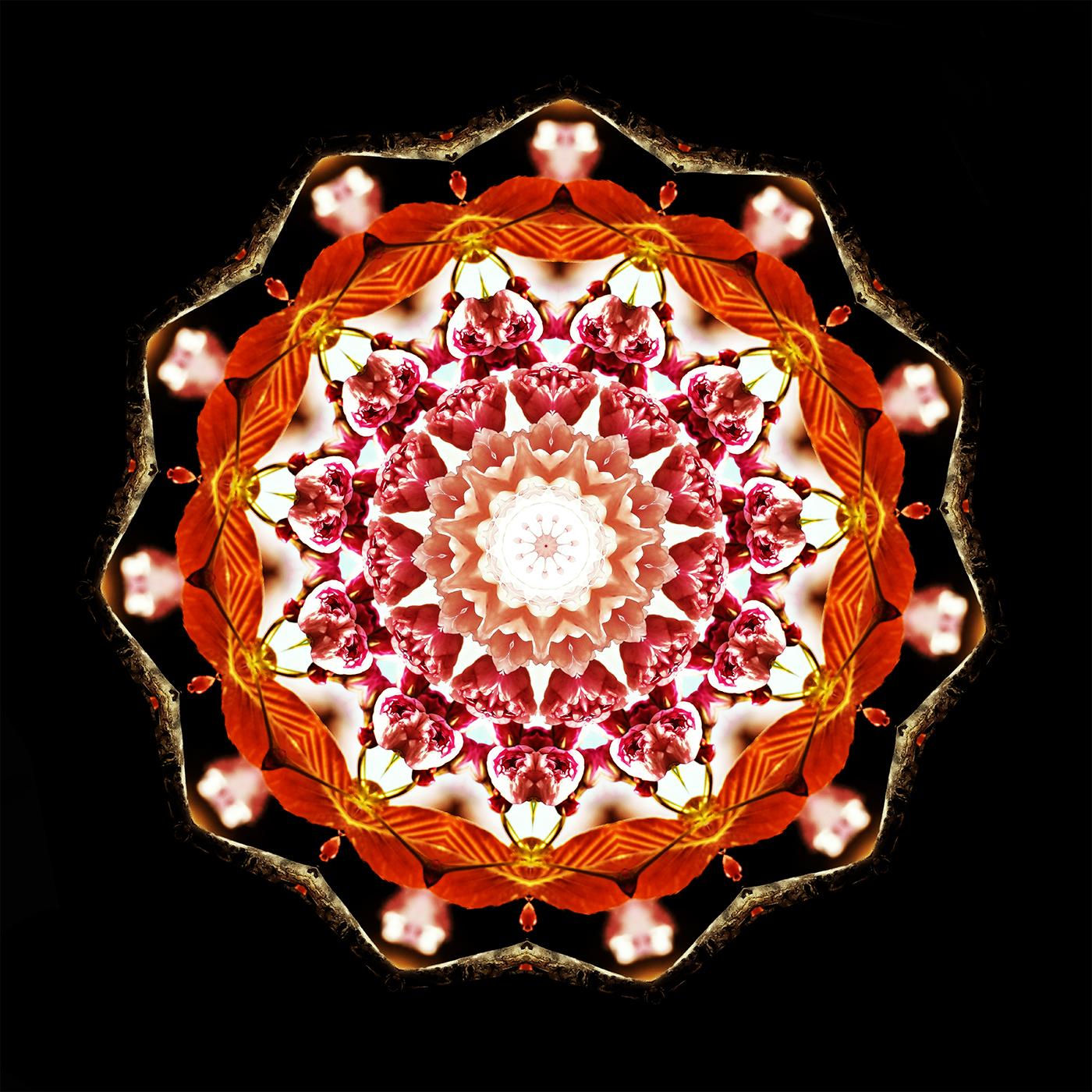 Cherry Blossom Kaleidoscope A-1