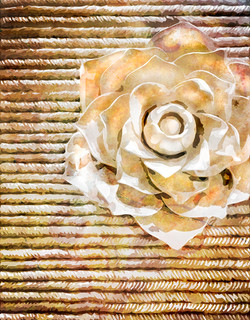 White Wynn Rose