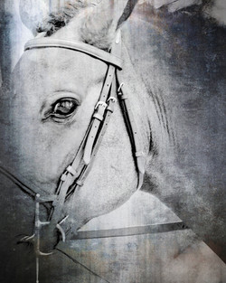 Middleburg Horse IMG_5130-3