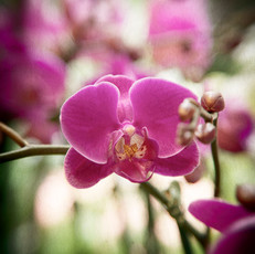 Floral 5868