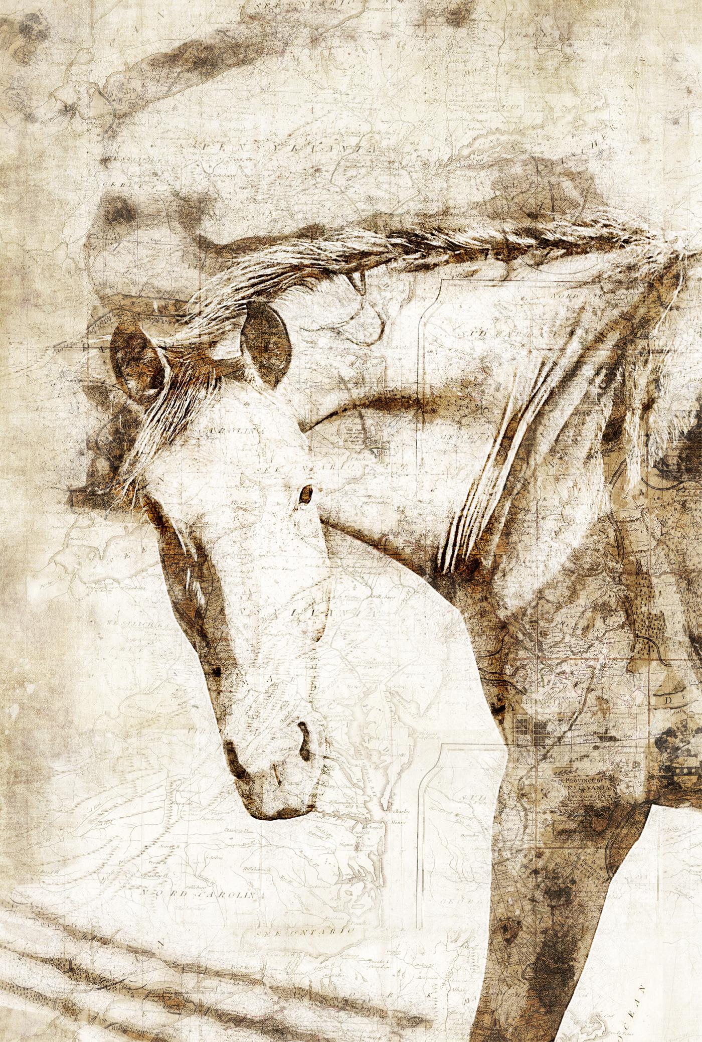 Middleburg Horses 5205 map