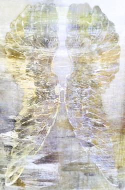 Wings 1609