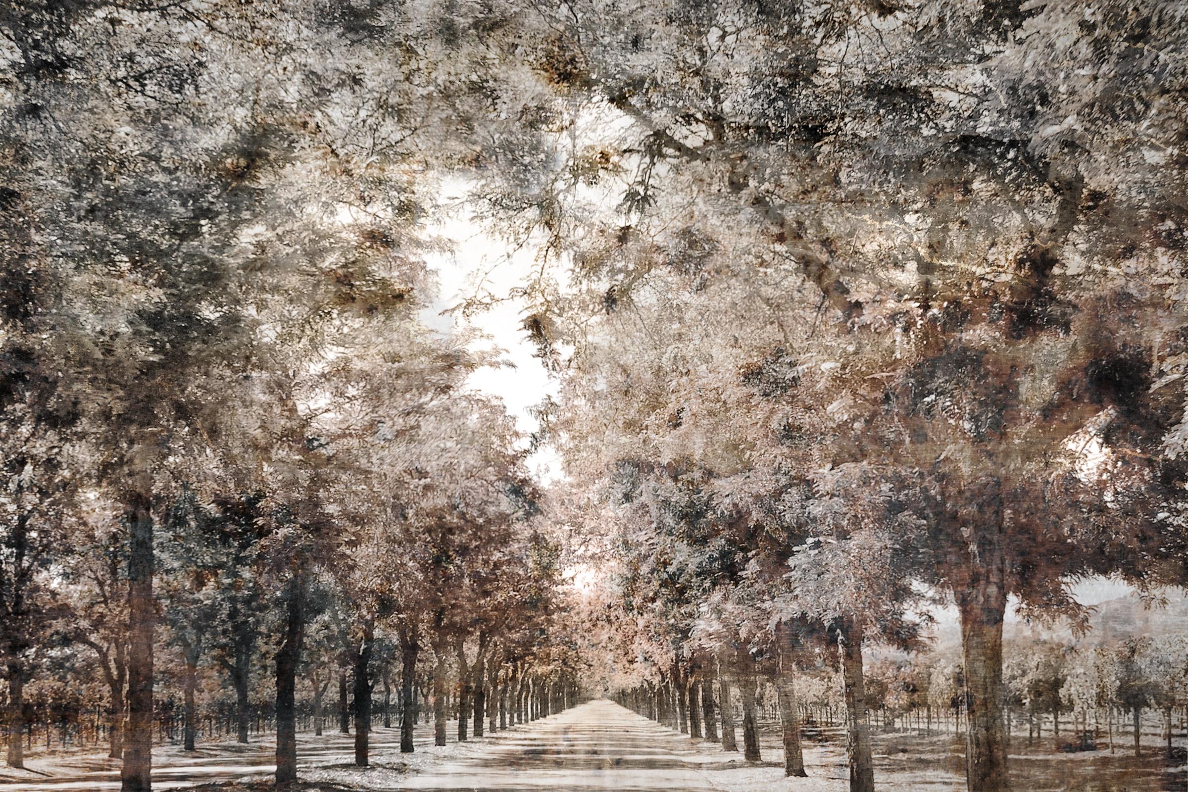 Shaded path | Napa California 270