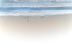 Birds of New Dheli _ India 8497