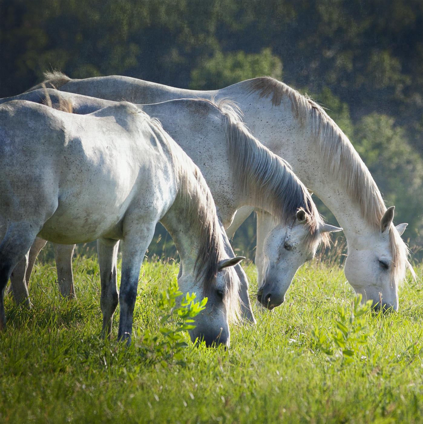 Middleburg Horses 5254