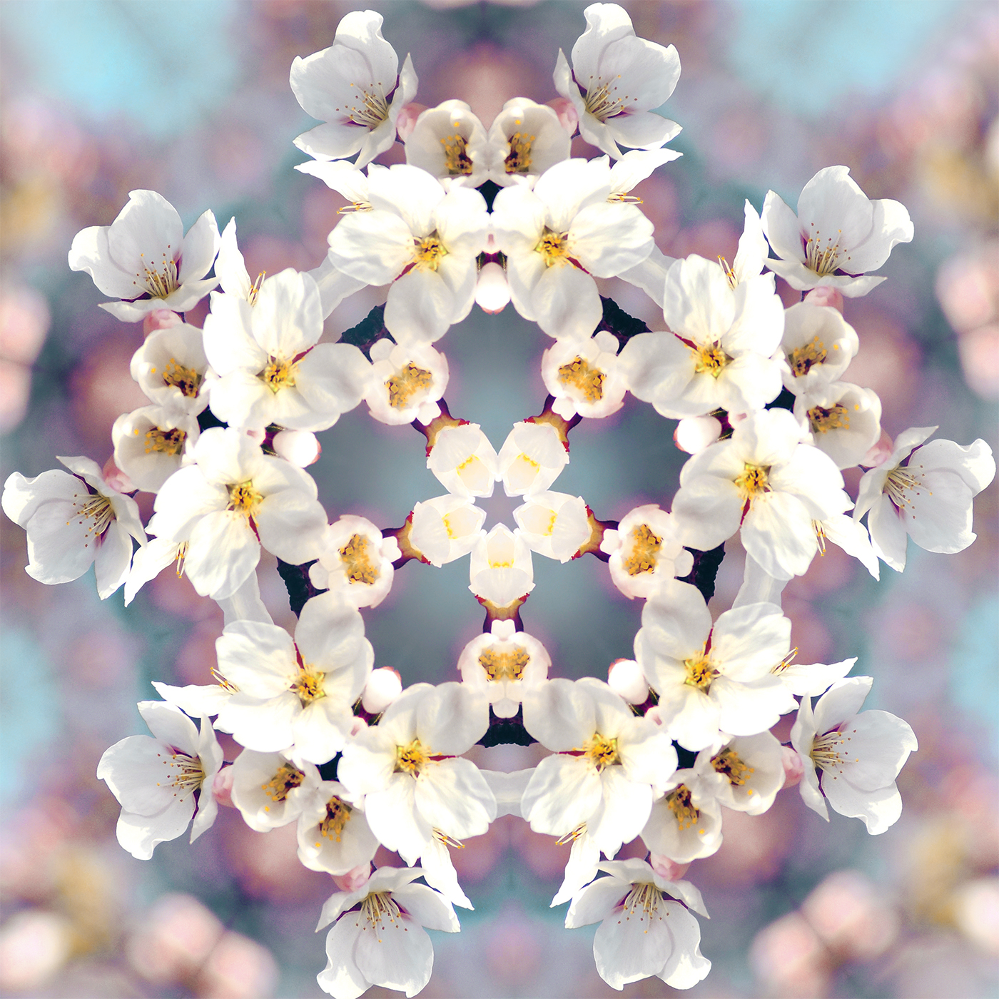 Cherry Blossom Kaleidoscope 3986772