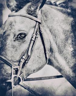 Middleburg Horse IMG_5130-2