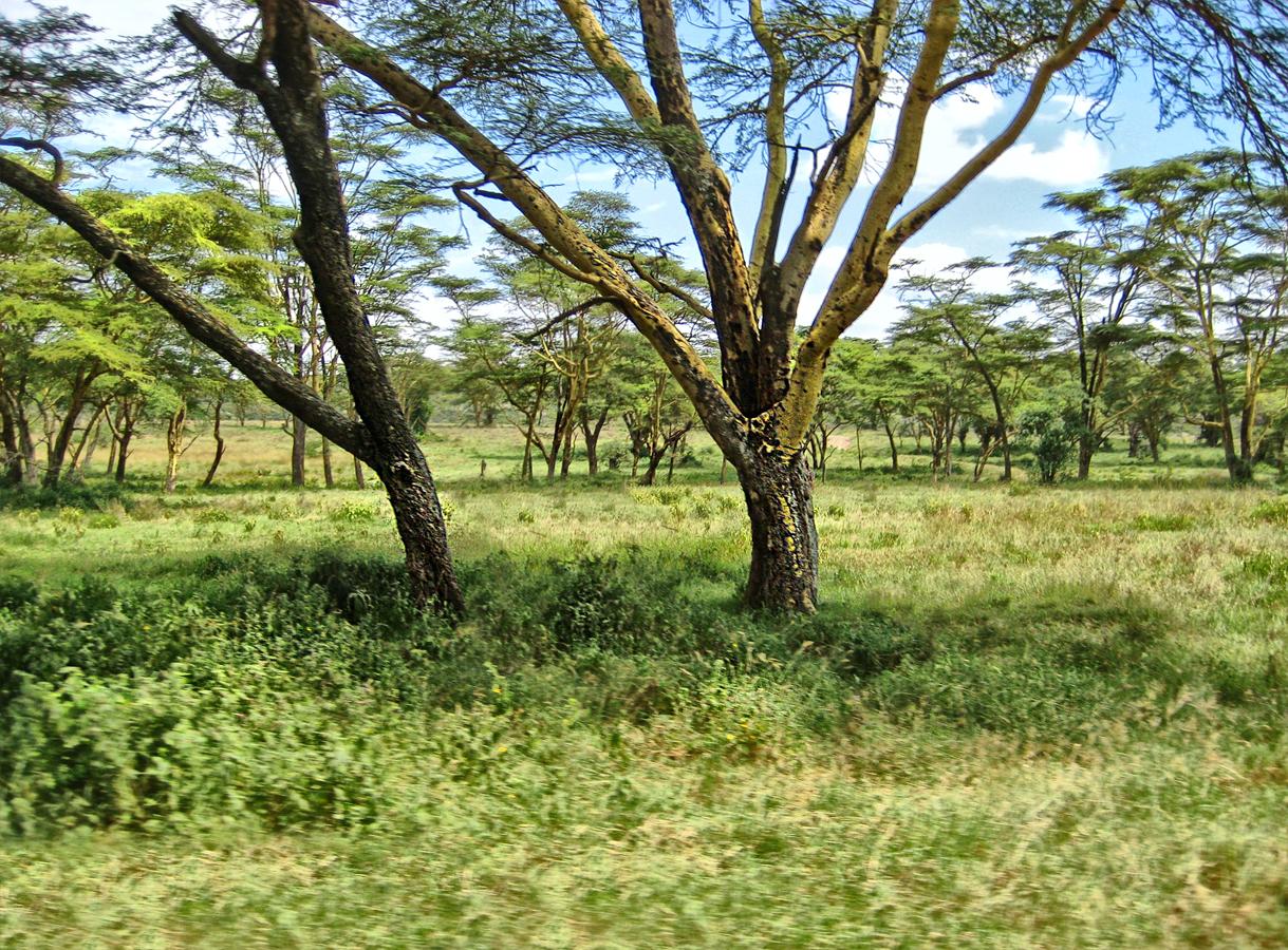 Kenya Tree 0194