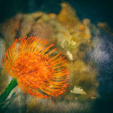 Floral 5935