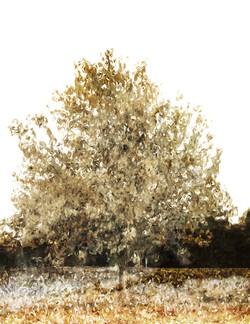 Earth Tree 2 | 0406
