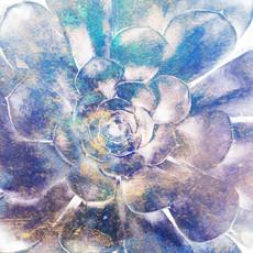 Succulent 9848-2