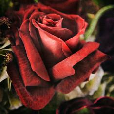 Floral 5884