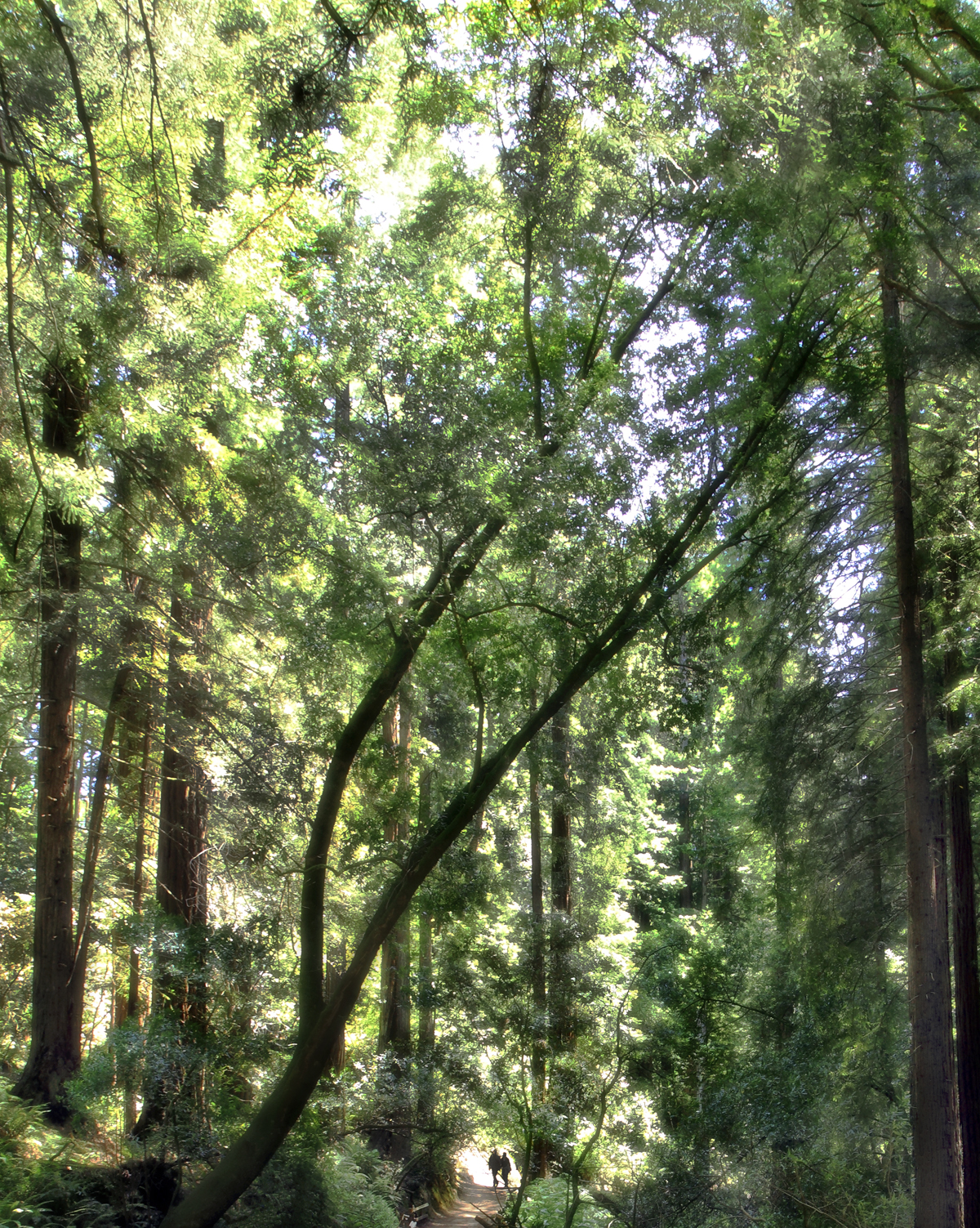 MuirWoodsCoupple