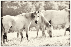 Middleburg Horses IMG_5257-2