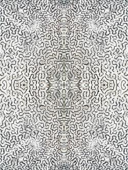 White Zebra 317