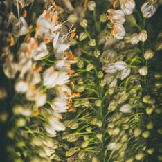 Floral 5910