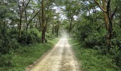 Kenya Tree 0209