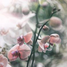 Floral 5867