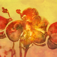 Floral 5871 Gold