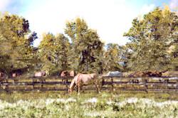 Middleburg Horses 5164