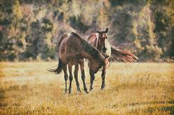 Middleburg Horses 5252 vintage2
