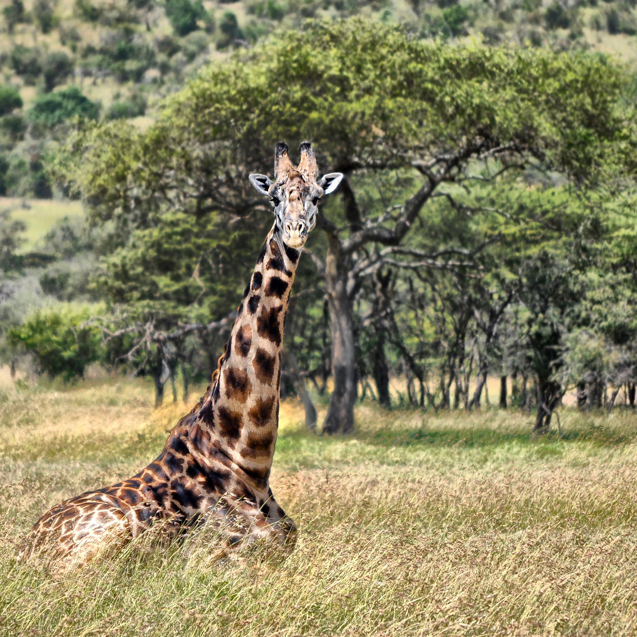 Kenya0368