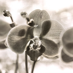 Floral 5871