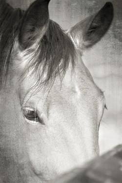 Middleburg Horse IMG_5240