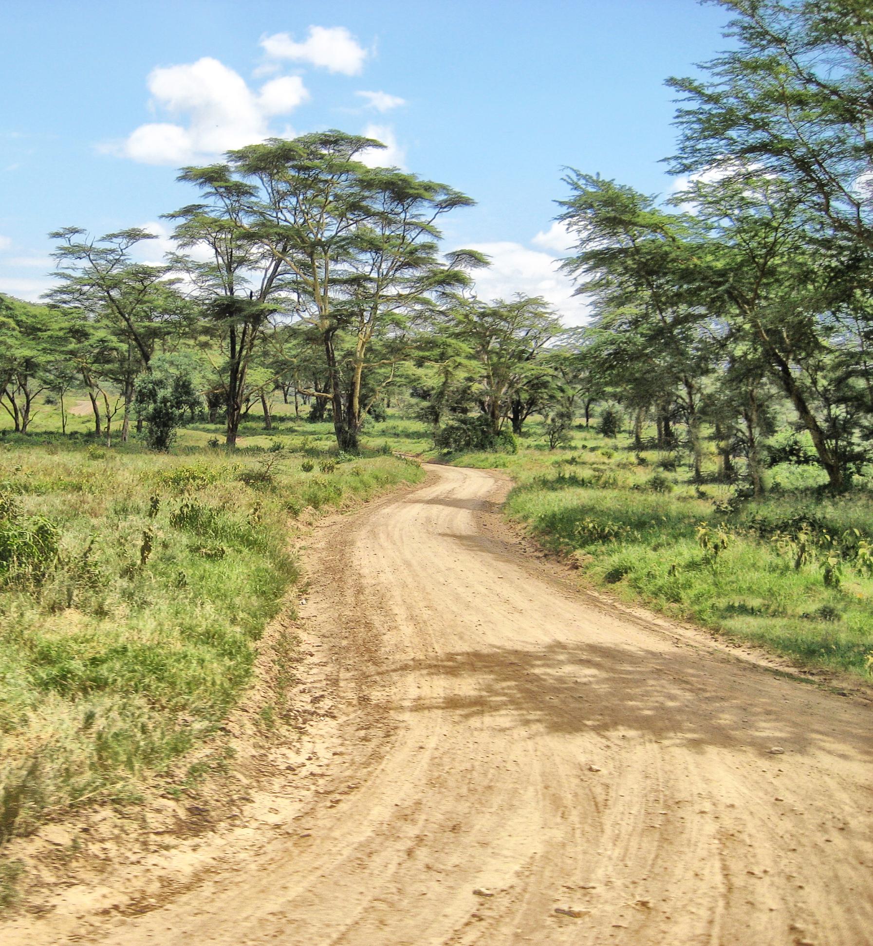 Kenya Tree 0193