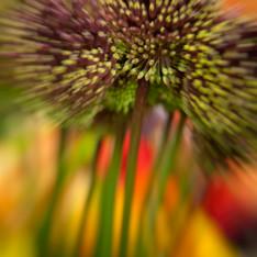 Floral 5926-2