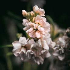 Floral 5906-2