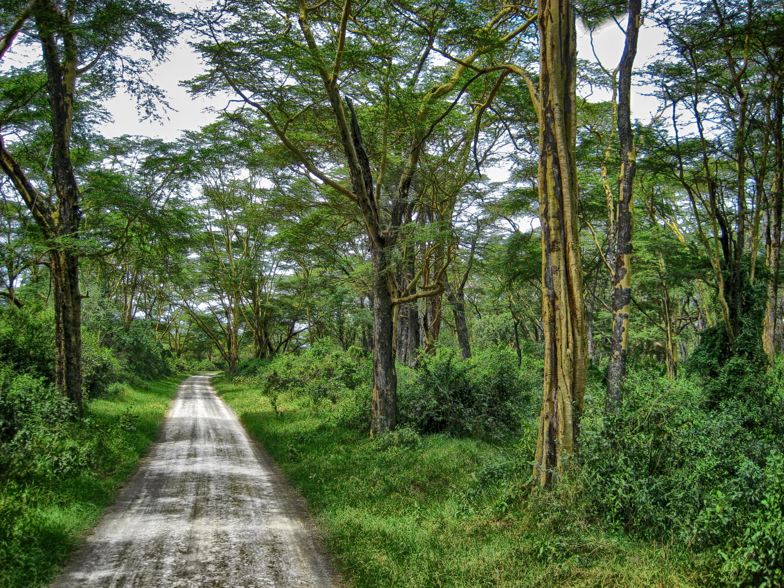 Kenya0206