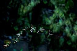 Humming Bird-lighter.jpg