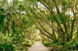 Kirstenbosch Garden Cape Town South Africa 8717