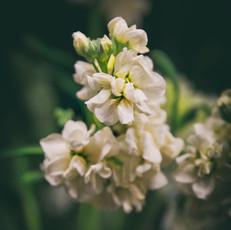 Floral 5906
