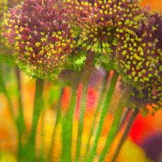 Floral 5926-1