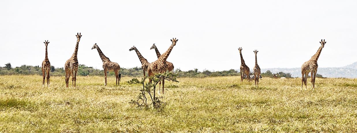 Kenya0370