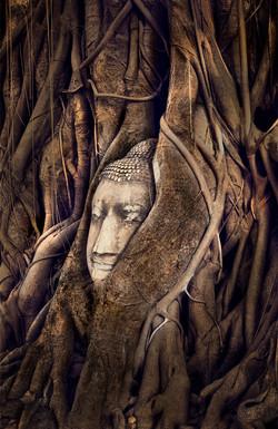 Tree of Wisdom _ 1563