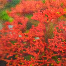 Floral 5919-2