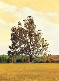 Greenhill Winery VA 5161 Painting