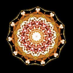 Cherry Blossom Kaleidoscope A-2
