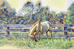 Middleburg Horses 5168 art