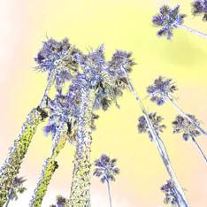 Santa Monica Palms 1531-5