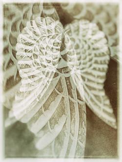Angel Wings 2361