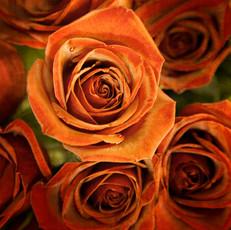 Floral 5928