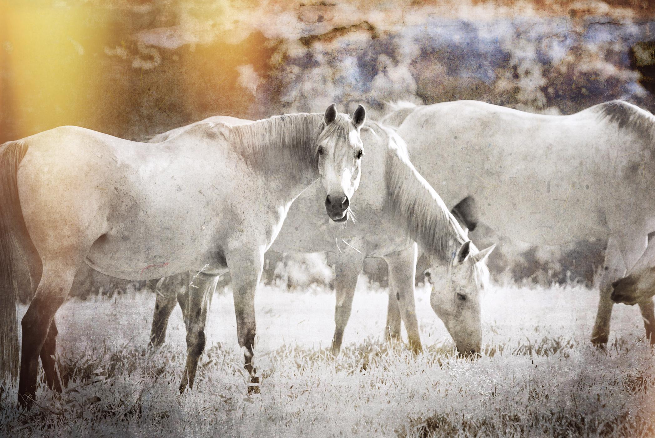 Middleburg Horses IMG_5257-1