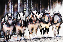 Work Pony 3