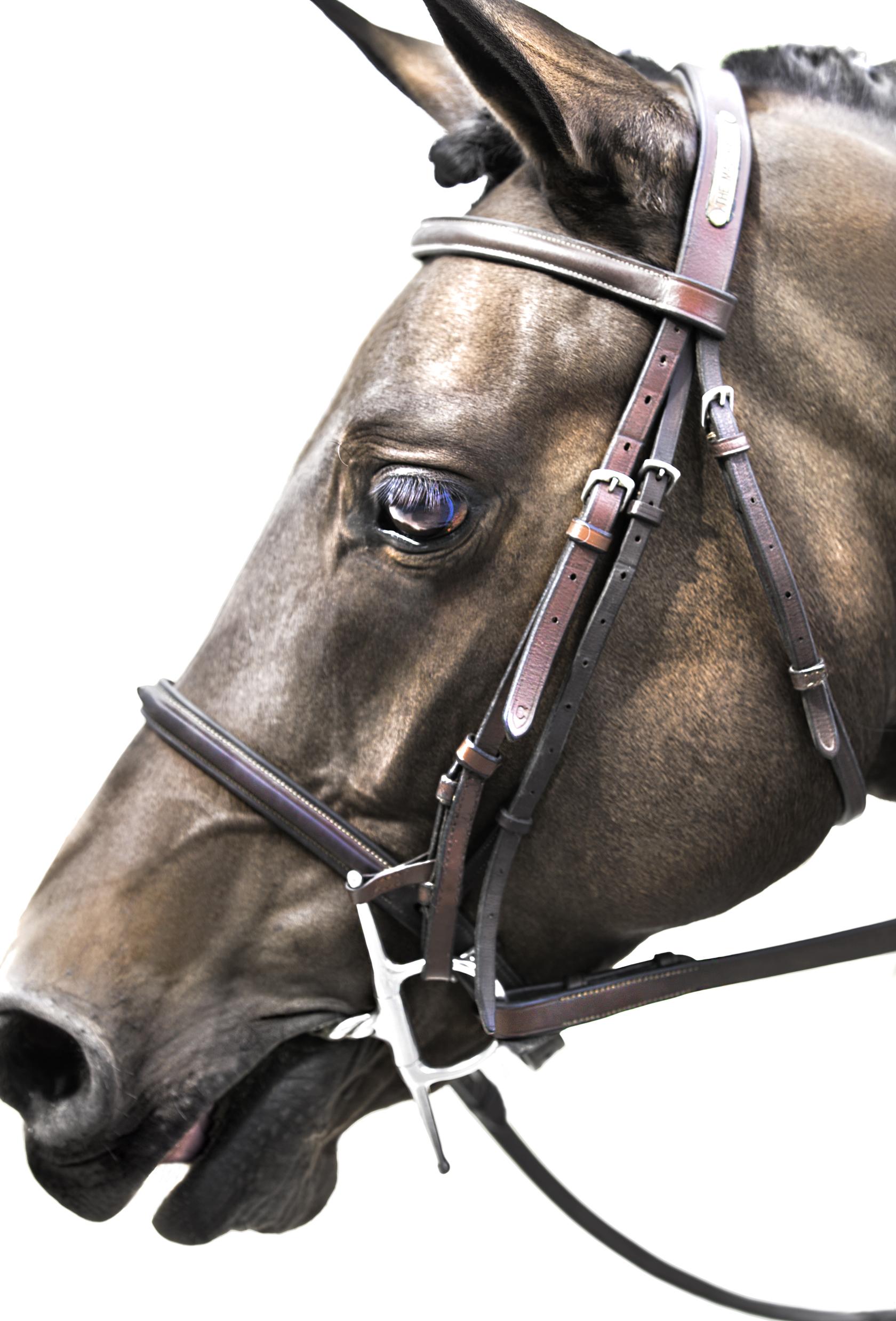 Middleburg Horse 5151