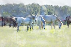 Middleburg Horses 5258