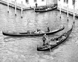Venice 2766